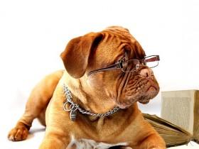 犬・猫大好き!盛岡市内のペットショップ5選